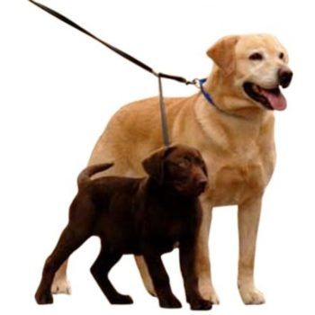 sporn_double_dog_leash_1
